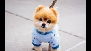 Tan chảy với những chú chó dễ thương vô đối - Chó c๐n dễ thương hài hước