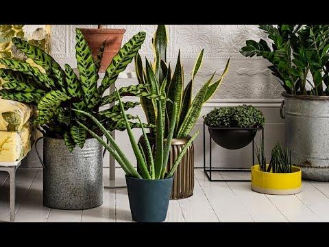 ОПАСНЫ ли комнатные растения?