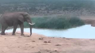 Południowa Afryka safari