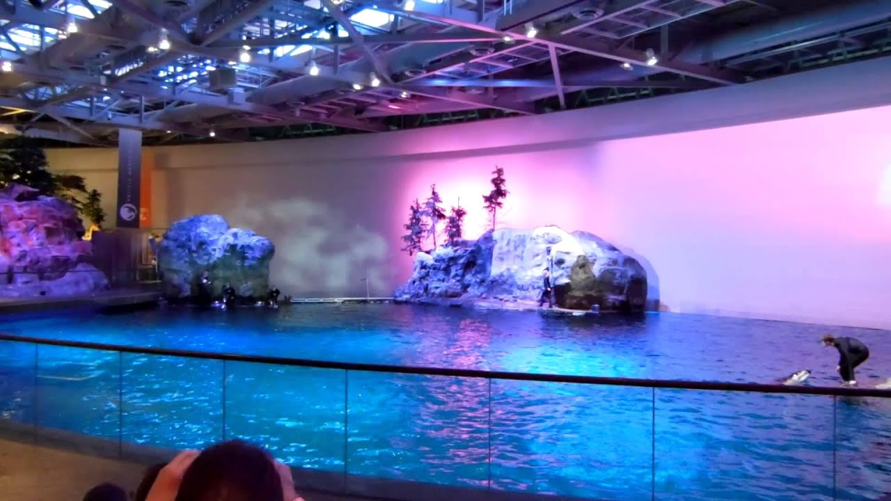 Dolphin Show At John G Shedd Aquarium Chicago Il Youtube