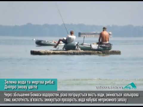 Телеканал АНТЕНА: Зелена вода та мертва риба: Дніпро знову цвіте