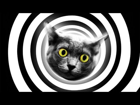 Cat Hypnosis
