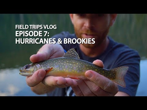 Hurricanes & Brook Trout in Colorado | #FieldTrips VLOG Ep 7
