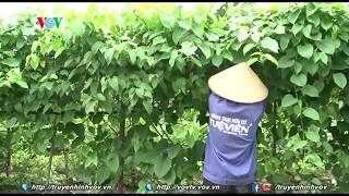 Nông trại hữu cơ Tuệ Viên - Một mô hình tiêu biểu cho sản xuất nông sản sạch