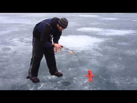 Huge Pactola lake trout