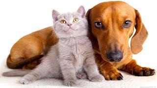 Трогательное видео о дружбе животных.Кошки, собаки и не только....