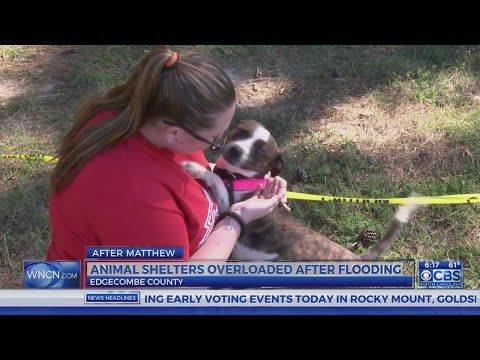 Edgecombe County Animal Shelter has an overflow of dogs after Hurricane Matthew