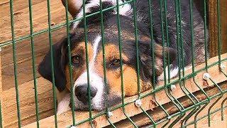 Приют для животных выселяют          СТС-МИР.