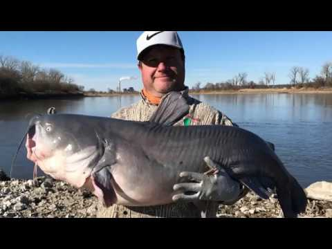 January Blue Catfish / Missouri River / Kansas USA