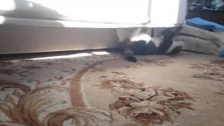 Кошка дуреет