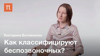 Современная зоология беспозвоночных — Екатерина Богомолова / ПостНаука