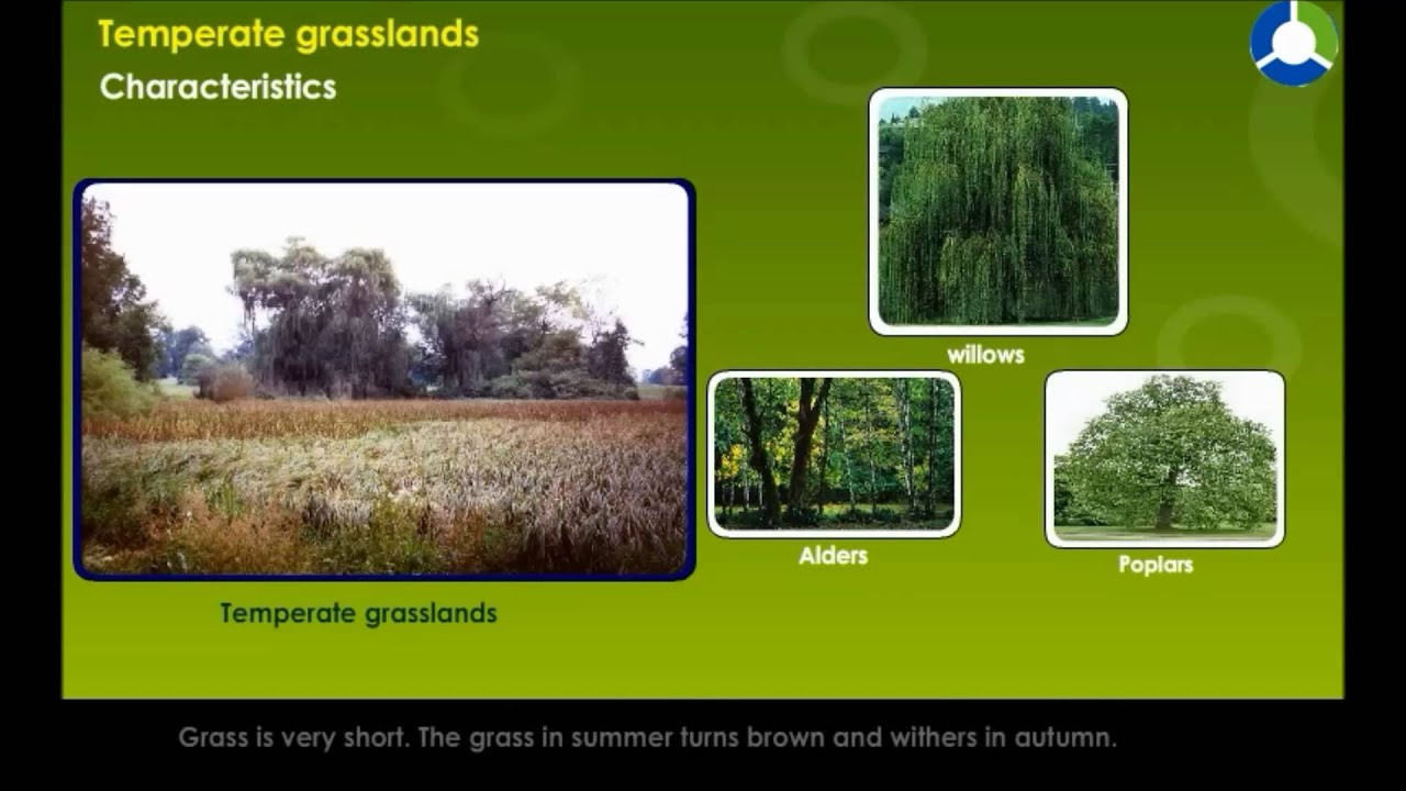 temperate grassland features Landforms of the grasslands biome the savanna grassland features both grass and temperate grasslands are marked by the prevalence of grasses above all.