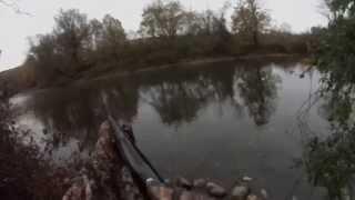 Ny State Wood Duck Kill