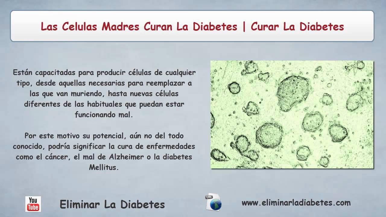 Las Celulas Madres Curan La Diabetes | Curar La Diabetes