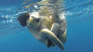 Robotic Turtle's Romantic Liaison