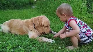 СобАка ЛучшИй Друг ☀️ РебЕнок и ЖивоТные ☀️ СоБака играет