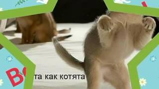 Смешные картинки приколы про котов )))))