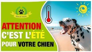 CONSEIL & ASTUCE QUAND IL FAIT CHAUD AVEC TON CHIEN !!!!!