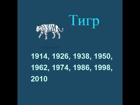 Год Тигра и характеристика знака зодиака Тигр восточного