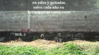 Documental de Huatusco Veracruz Noe Contreras Fontes