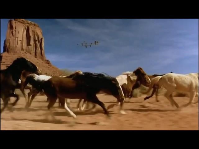 Video de caballos salvajes corriendo libres en la playa y campo