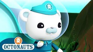 Octonauts - Brave Leader   Cartoons for Kids   Underwater Sea Education