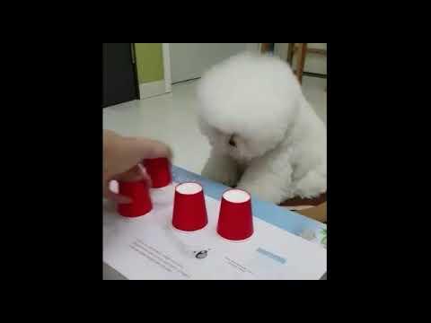007 Smart dog.
