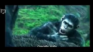 Отрывок из фильма  Планета обезьян Революция