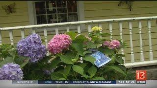 Home & Garden: Tips on hydrangeas
