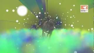 Bulldog In Space [dogtv]