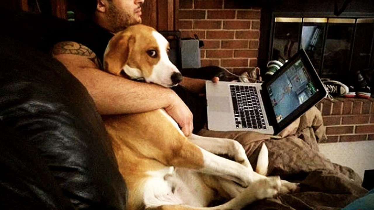 JEALOUS DOGS Want Attention From Their Owners Funny Pets - 26 funny photos of guilty dogs