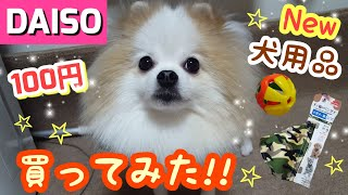 【犬用品】DAISOのペット用品を買ってみた!New 【Dog Supplies】I bought DAISO's pet supplies! thumbnail