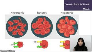 Transportasi di dalam dan Antar Sel (materi 2) Kelompok 4 Biologi Sel