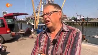 Die Rückkehr der Seehunde [Full Video]
