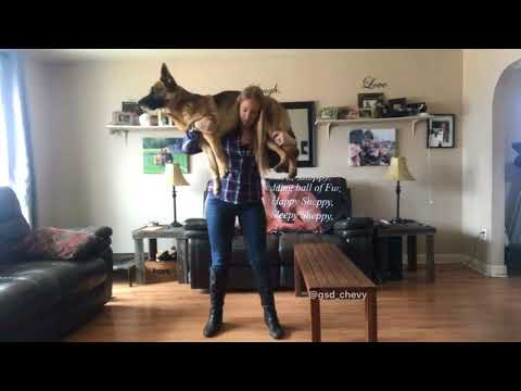 Women holds 75lb Dog on her shoulders, What she does next is shocking!