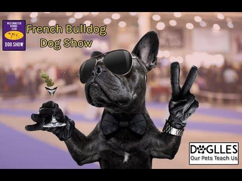 French Bulldog Dog Show