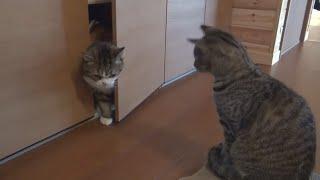 Кот просит друга помочь