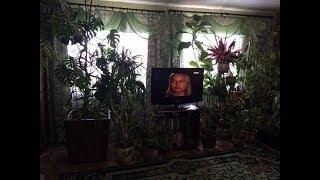 видео Растения в интерьере