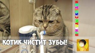 Кот который сам чистит зубы! | Приколы с котами