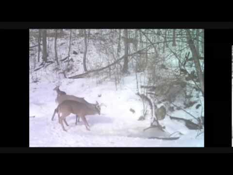 Primos DPS Deer Positioning System