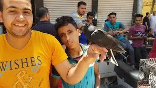 جولة بعد العيد( ج١)من سوق#جمهورية_المحله_الكبري_للحمام 2019 Egyptian  pigeon's market