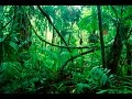 Download GET OUTA MY JUNGLE EAR RAPE MP3 song and Music Video
