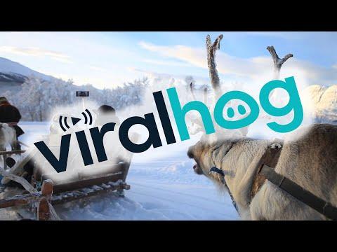 На оленях по Норвегии