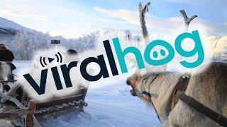 Reindeer Drawn Sleigh thumbnail