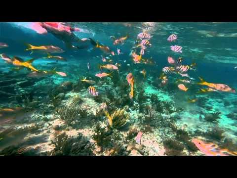 Deserted Island Beach & Snorkel, The Bahamas