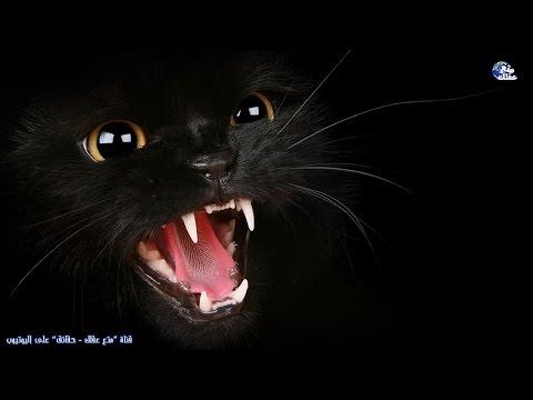 حقائق مخيفة ومرعبة عن القطط !