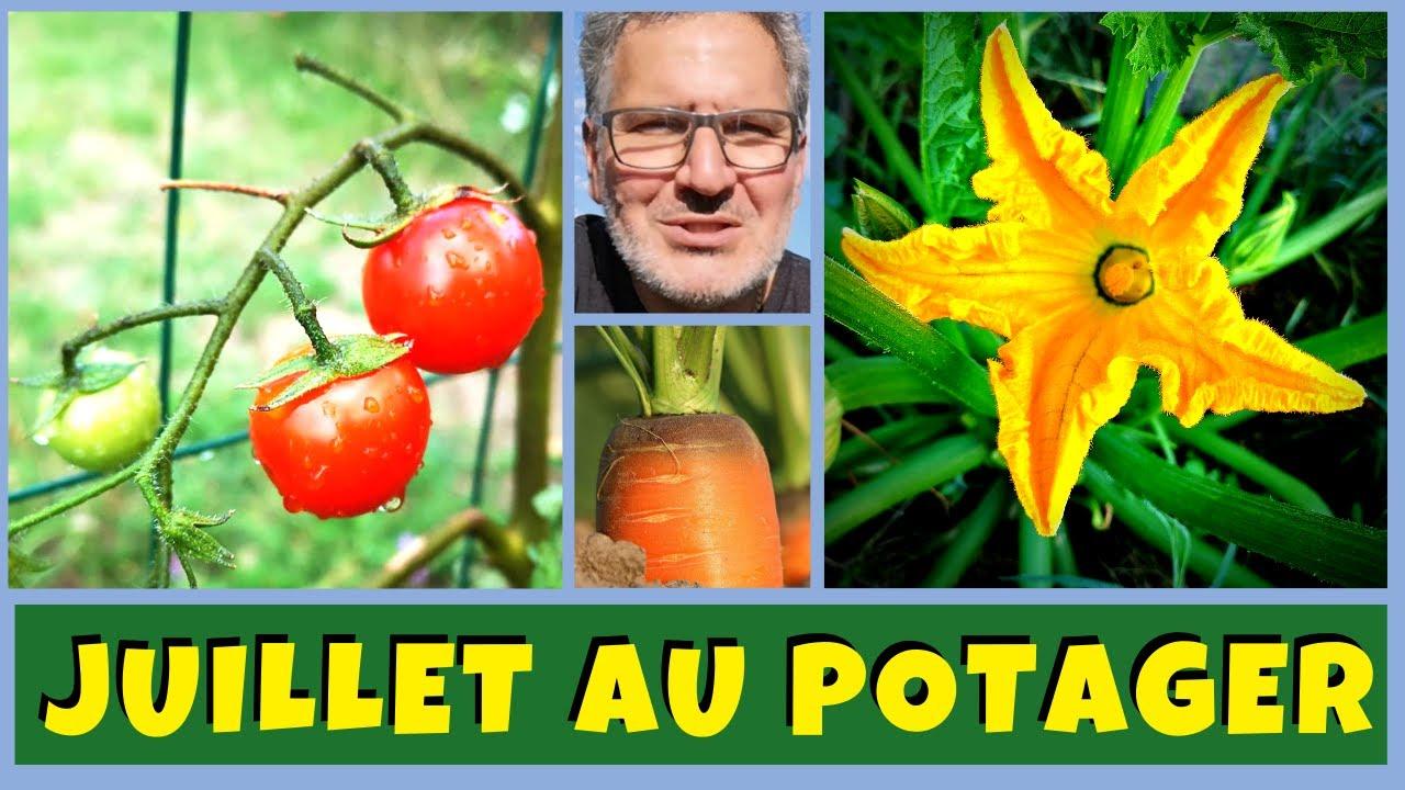 Que semer, planter et bouturer en Juillet au potager ?