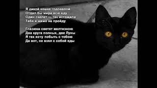 Стихи Черкашин Дмитрий - Дикая кошка