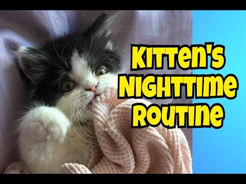KITTEN'S NIGHTTIME ROUTINE!
