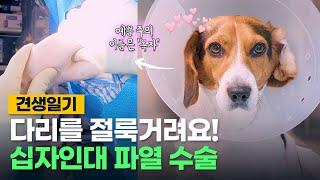 [견생일기] 강아지 십자인대 파열 수술했어요